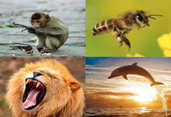 你的爱情基因是哪种?猴子、蜜蜂、狮子,还是海豚?